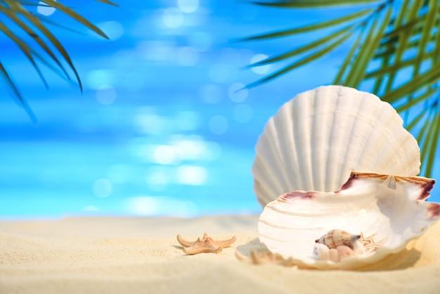 Pectinida zeeschelp zeesterren en andere zeeschelpen op het strand met wit zand