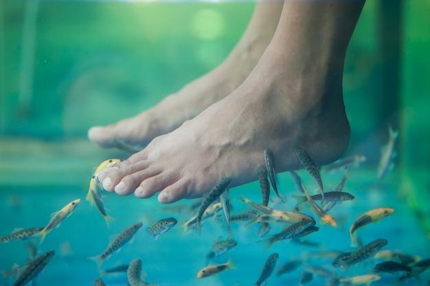 Pedicure fish spa, fish spa pedicure, rufa garra fish spa pedicure massagebehandeling, close-up van voeten en vissen in water.