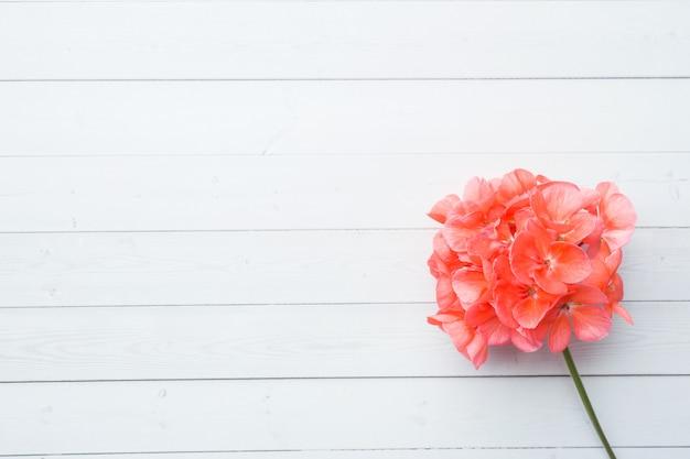Pelargonium, tuingeranium, roze geraniumbloem op witte houten achtergrond met exemplaarruimte.