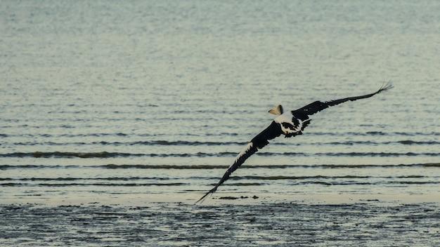 Pelikaan die over het overzees vliegt