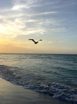 Pelikaan vliegt over een zandstrand in de schemering bij zonsondergang