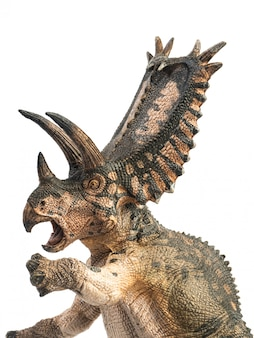 Pentaceratops-dinosaurus op witte achtergrond