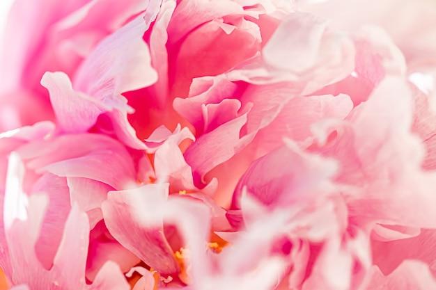 Peony bloem in een tuin bloemenschoonheid en botanische achtergrond voor huwelijksuitnodiging en wenskaart natuur en milieu concept