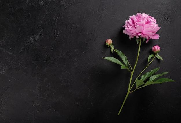 Peony bloem op een zwarte achtergrond