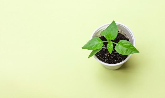 Pepperskiemen op een groene ondergrond. bovenaanzicht. tuinieren concept.