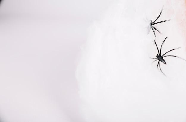 Peren kruipen op een witte achtergrond