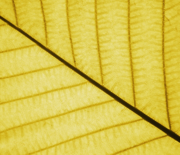 Perfecte bladgoudenpatronen - close-up