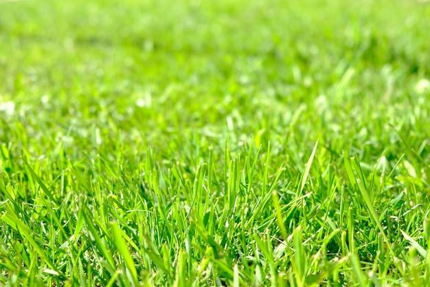 Perfecte groene achtergrond door het verse gras