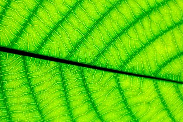 Perfecte groene bladpatronen - close-up