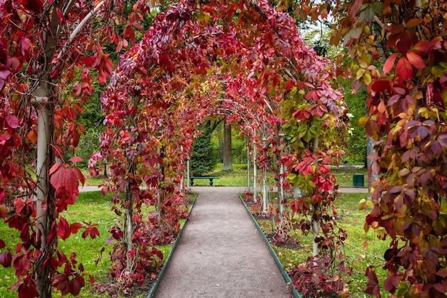 Pergola in de tuin van het oranienbaum palace complex, lomonosov, sint-petersburg, rusland
