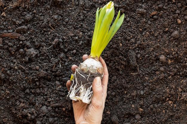 Persoon die een plant boven de grond houdt
