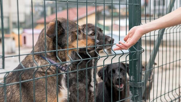 Persoon die naar honden reikt via hek bij schuilplaats