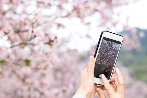 Persoon fotograferen van kersenbloesem met smartphone