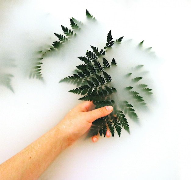 Persoon holding fern