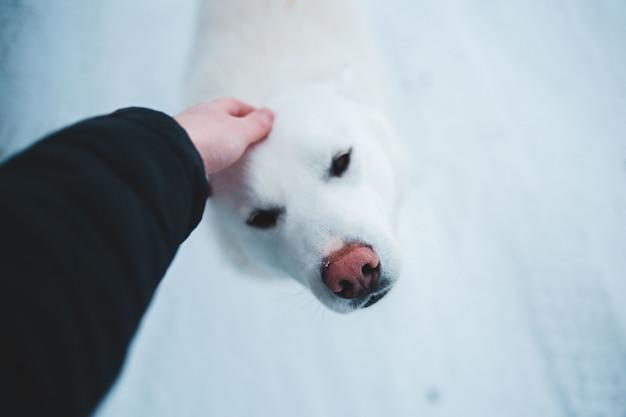 Persoon in zwarte jas houdt volwassen grote witte kortharige hond