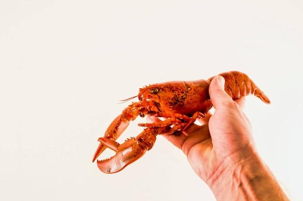 Persoon met een rivierkreeft in zijn hand