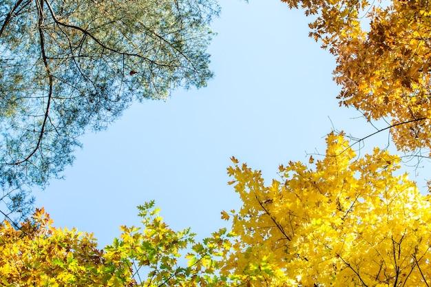 Perspectief-up weergave van herfst bos met fel oranje en gele bladeren