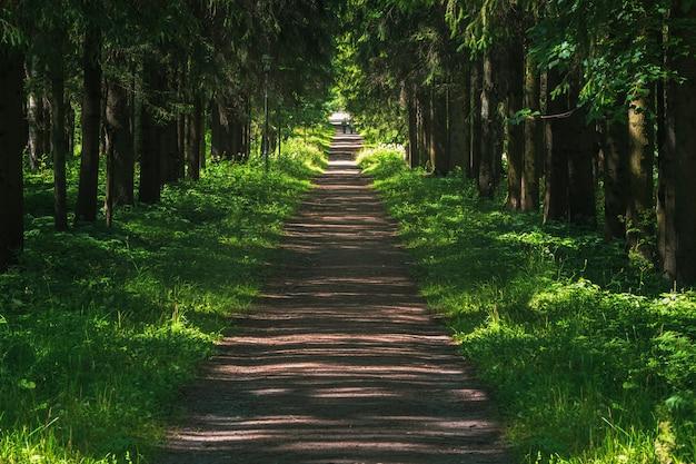 Perspectief van het pad in het oude zomerpark