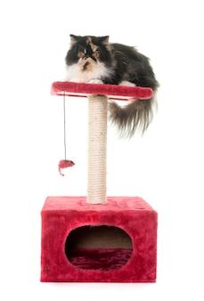 Perzische kat op krabpaal