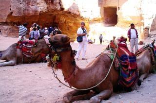 Petra kameel