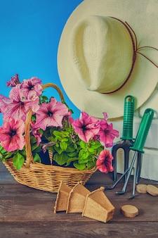 Petuniabloemen, tuinhulpmiddelen en een strohoed op het gras in de tuin tegen een blauwe hemel met exemplaarruimte