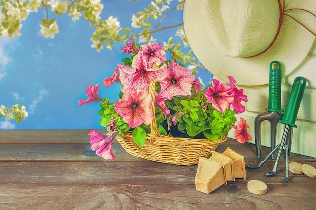 Petuniabloemen, tuinhulpmiddelen en een strohoed op het gras in de tuin tegen
