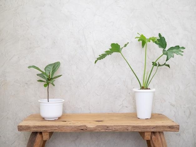 Philodendron selloum en ficus elastica bourgondische botanische tropische kamerplant in moderne witte pot op grunge houten tafel