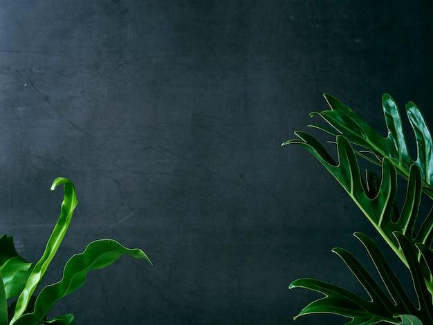 Philodendron xanadu plant bladert tropisch