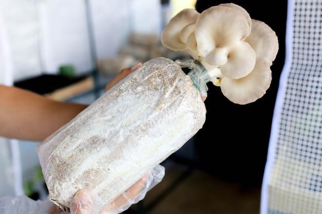 Phoenix mushroom wordt gekweekt op biologische boerderijen