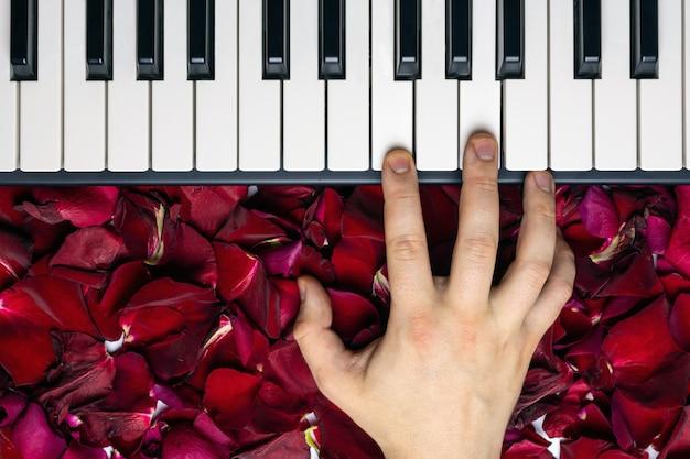 Pianisthand op rode roze bloembloemblaadjes die romantische serenade op de dag van de valentijnskaart spelen