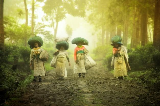 Pickers gaan naar huis uit de velden