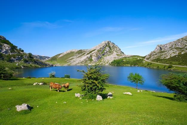 Picos de europa enol-meer in asturias spanje