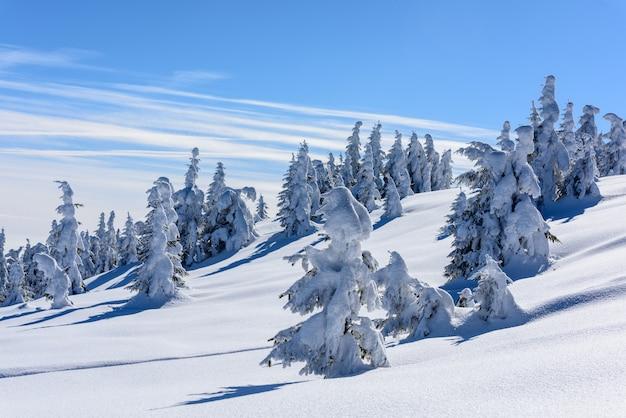 Piek van de berg met besneeuwde bomen.