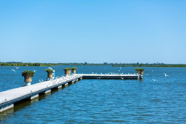 Pier op de oever van de rivier. een grote zwerm meeuwen. zomerdag.