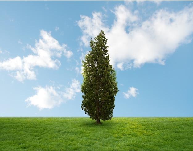 Pijn boom in het midden van een veld