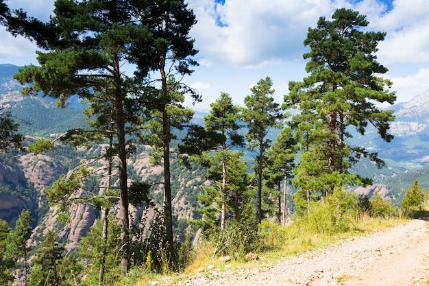 Pijnbomen bij bergen tegen vista