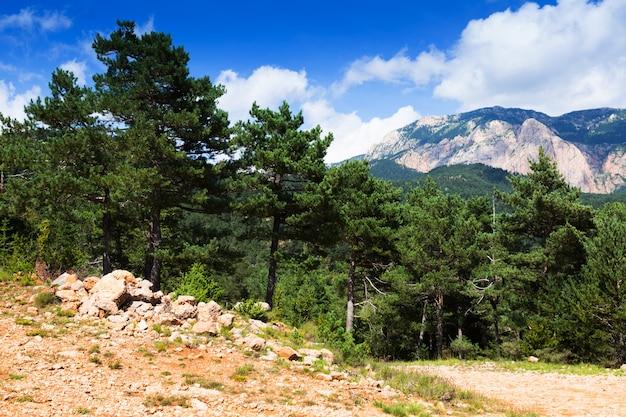 Pijnbomen in de bergen