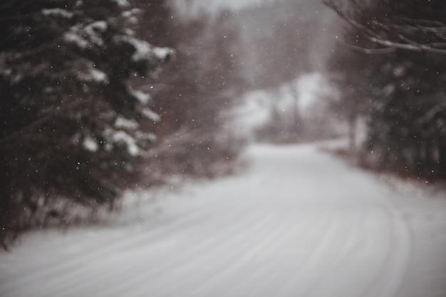 Pijnbomen op sneeuwveld gedurende dag
