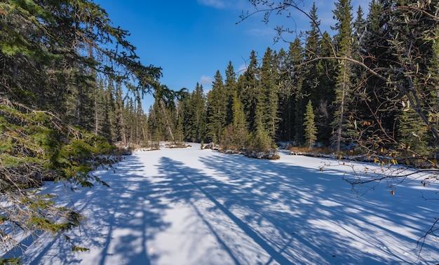 Pijnbomen werpen schaduw op een bevroren stroom bedekt met sneeuw in het bos in zonnige winterdag.