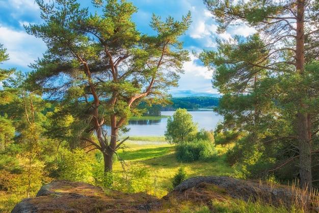 Pijnboom aan de oever van het ladogameer in karelië, rusland op een heldere zonnige herfstdag