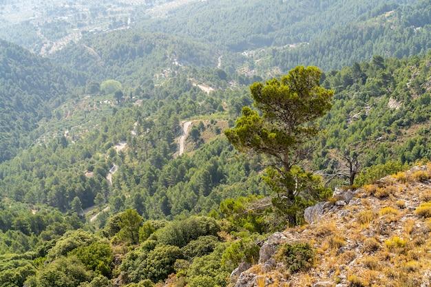 Pijnboom bij berg mariola.