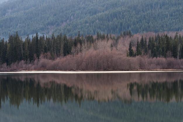 Pijnboombomen die meer in een bos, fluiter, brits colombia, canada overdenken