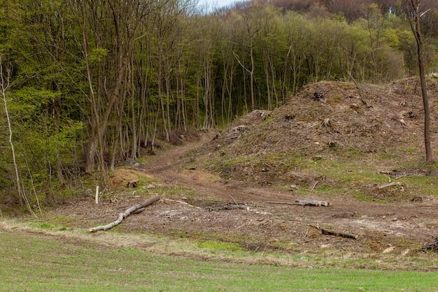 Pijnboomboom bosbouw exploitatie in een zonnige dag. stompen en boomstammen laten zien dat overexploitatie leidt tot ontbossing die milieu en duurzaamheid in gevaar brengt