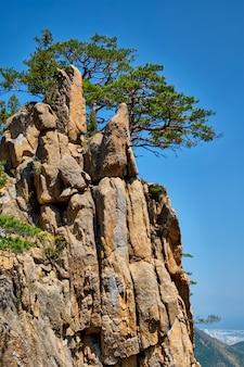 Pijnboomboom en rotsklip, seoraksan national park, zuid-korea