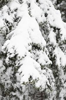 Pijnboomtakken en bladeren onder de sneeuw