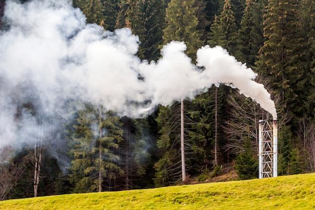 Pijp met dikke witte rook in dennenbos