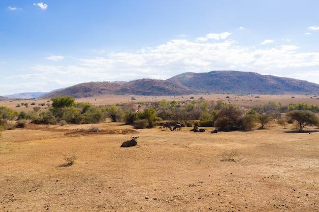 Pilanesberg national park landschap, zuid-afrika