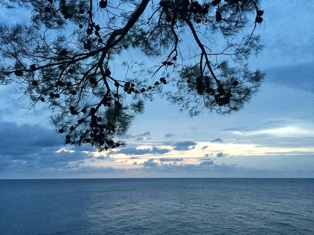 Pine tak met kegels op de blauwe achtergrond van de zee en de lucht