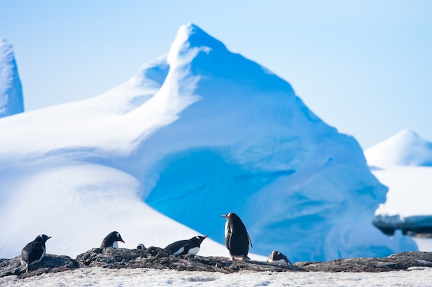 Pinguïns in antarctica