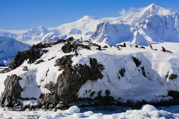 Pinguïns in een besneeuwd landschap
